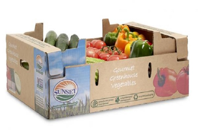 durable food boxes